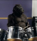cadbury_dairy_milk_gorilla_33
